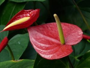 houseplants to clean indoor air